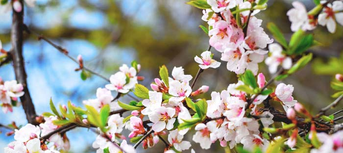 Spring is a wonderful time to enjoy shopping, dining, and the wonderful sights in New Hope, Bucks County PA