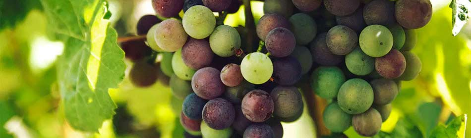 Wineries Wine Shops Vineyards In New Hope Bucks County Pa